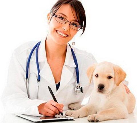 veterinaria1